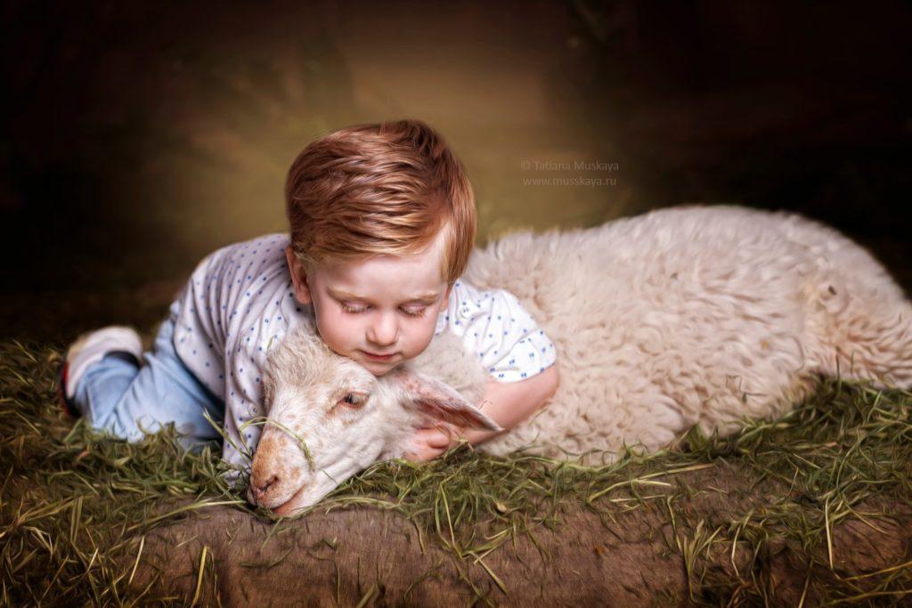 фотосессия с овцой