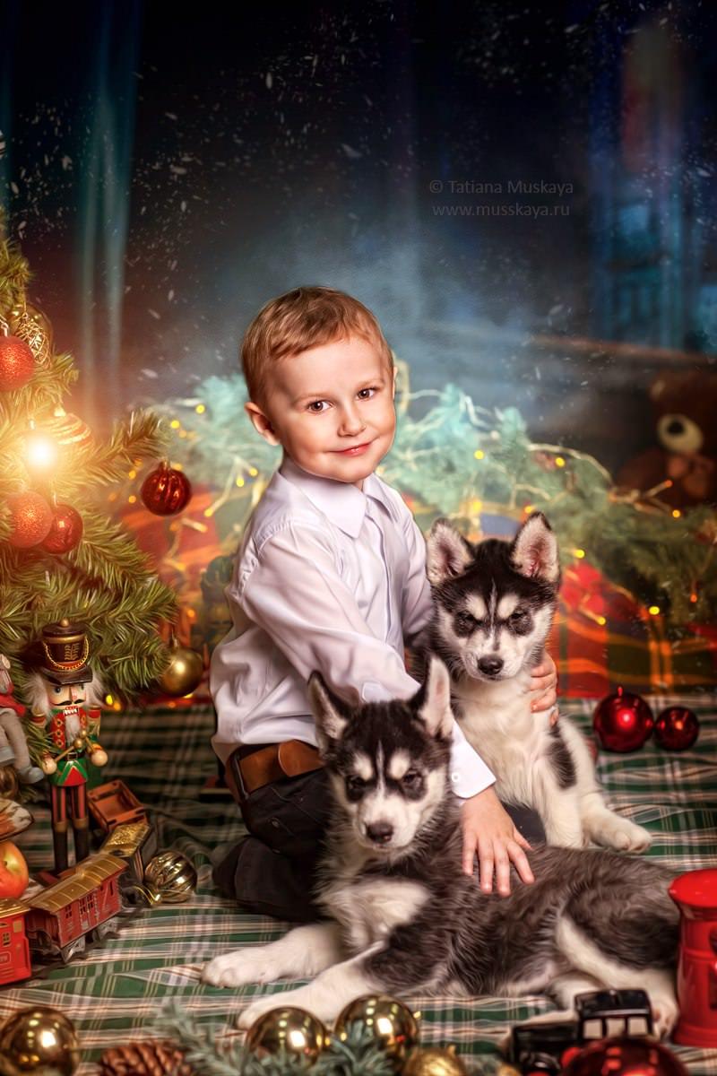 семейная новогодняя фотосессия с хаски